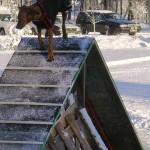Ella-agility-20-nov-04-003