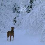 Ella-på-av-snöträd-hindrad-