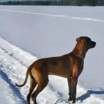 Gunnar-står-i-snö-13-mars-0