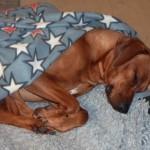 Keira-sover-på-jobbet-feb-1
