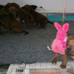 Jag VÅGADE jag, en rosa kanin skrämmer inte mig inte