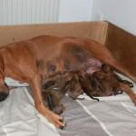 Stolt mamma med fina barn