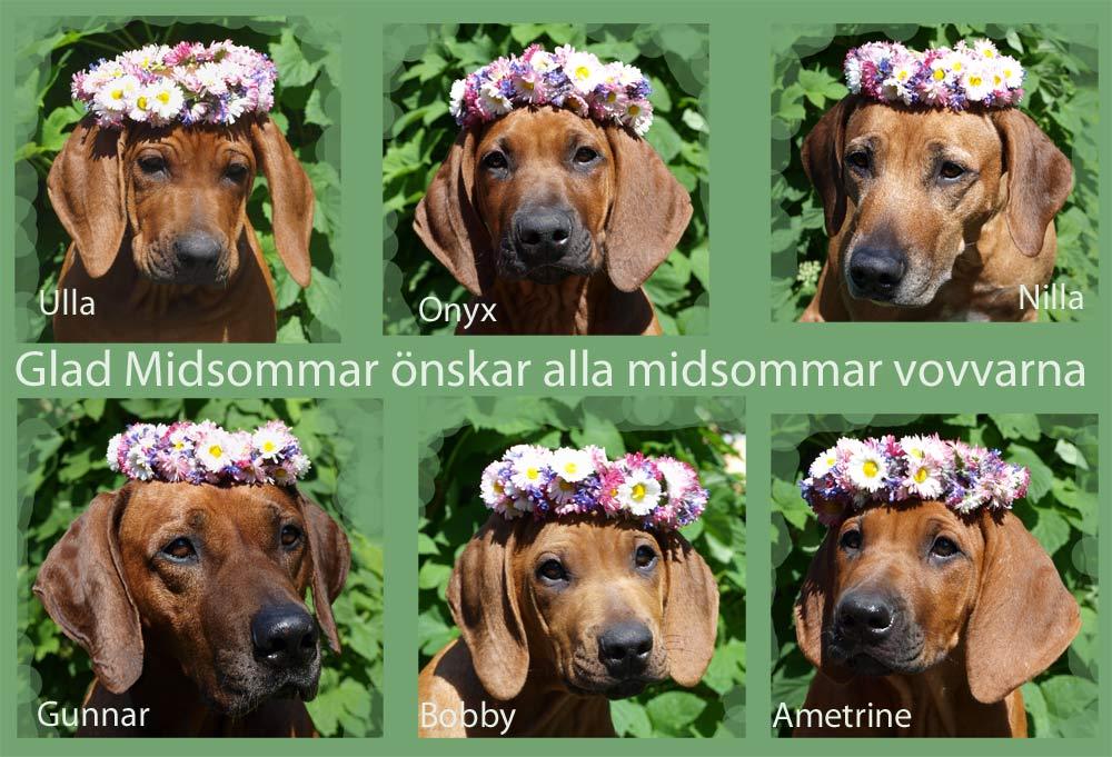 Midsommar-2013-fb